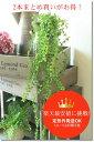 フェイクグリーン 壁掛け 造花 壁掛け インテリアグリーン ハンギング ガーランド【造花 グリーンビーン 2個セット】