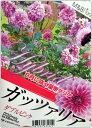 【新品種】皇帝ダリア ハイブリッド ガッツァリア 「ダブルピンク(八重ピンク花)」4号ポット苗