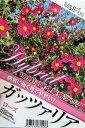 【新品種】皇帝ダリア ハイブリッド ガッツァリア 「ローズ(一重赤花)」4号ポット苗