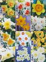 《エントリーでポイント5倍》【花終わり】【選べる16種】水仙(スイセン) ポット苗(b7)