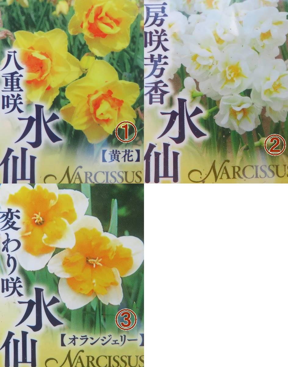 【選べる3種】 水仙(スイセン) 3号ポット苗(d15)