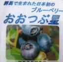 ブルーベリー おおつぶ星 6号【初心者でも育てやすい果樹ブルーベリーの苗木】(d1)