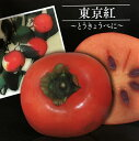 【現品】東京紅 大実甘柿の木(オオミアマガキ) 苗木 カキノキ 102(z3-3)