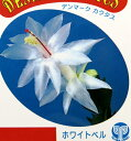 シャコバサボテン「蝦蛄葉サボテン」5号鉢 ホワイトベル