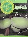 「ミッチェル」 ポポー(ポーポー) 8号ポット苗 果実も楽しめ、庭木としても人気♪(e2)