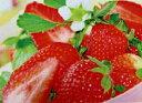 四季成りイチゴ 苗 夏っちゃん