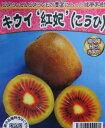 キウイフルーツ苗木 紅妃 コウヒ 4.5号苗