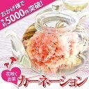 母の日 カーネーションのお花咲く工芸茶10種類とティーポット ギフト 優雅セット 送料無料
