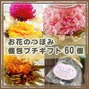 お花のつぼみ【個包ギフト】60個セット ポットで花が咲く工芸茶