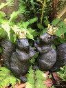 りすの置物 ガーデニング ガーデンオーナメント 置物 オブジェ インテリア バード かわいい 雑貨 樹脂 リス 動物 アニマル【 リスの王様 】