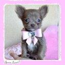【SUSANLANCI スーザンランシー】スワロフスキー リボン 首輪 セレブ愛用 犬用品 姫系