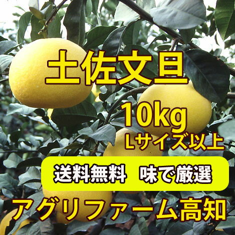 [Will start shipping from early February] ★ Tosa Buntan ( roji Pummelos and your household ) 10 kg, number of balls, みはからい (L larger) ★ * chilled the 105 Yen cod is +210 Yen