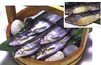 Whirlpool Ayu ★ Shimanto River in ( aquaculture, approximately 500 g, boxed and tail number of Omakase ) ★