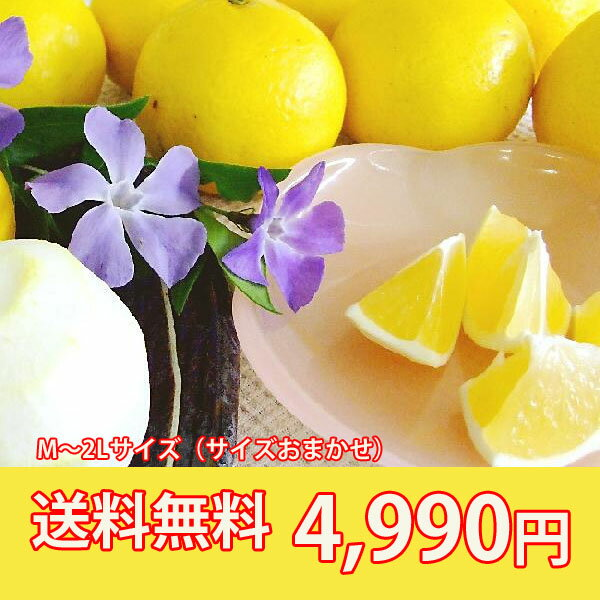 Reason! ★[! The Tosa konatsu (new summer Orange, Sun summer) / 5 kg are household ★ [always] a [collection] * cool flight 105 Yen +210 yen for cod is required