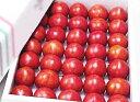 ★高知産・高糖度フルーツトマト2kg箱入り(ご家庭用・玉数オマカセ品)★[常][蔵]