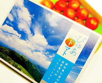 ★ gifts for Kochi production and fruit tomato (about 1 kg 1394a / ball number of Omakase)