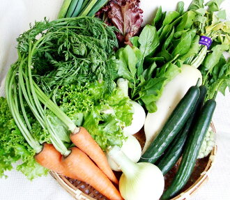 "★Of Kochi "") which is impossible of designation on the complete chemical-free vegetables set ""★[ storehouse] [v] (※ date and time"""