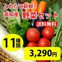 ★送料無料 「とれたて野菜」 11種類セット詰め合わせ 高知...