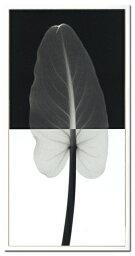 【取寄品】【送料無料】Steven N. Mayers Calla leaf 1 ISM-14222 X-Ray PHOTOGRAPHY インテリアアートポスター額付通販