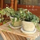 観葉植物 可愛いアイビー アンティーク調の手作りモスポット鉢・皿付き P13