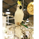 プエブコ PUEBCO ARTIFICIAL BIRDS バードオブジェParrotオウムSサイズ正面向き /101071