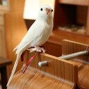 プエブコ PUEBCO ARTIFICIAL BIRDS バードオブジェBudgieセキセイインコ・ホワイト /126074【10P28Sep16】