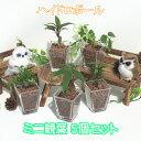 スクエアベースS ハイドロボール おまかせ5鉢セット【ハイドロカルチャー】【ミニ観葉植物】