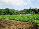 じゃがいも 5kg 送料無料 農薬栽培男爵 メークイン 品種が選べるジャガイモ岩手県軽米町産 無農薬栽培 越冬じゃがいも 5キロじゃがいも 種芋ではありませんちょっぴり規格外 A品B品混合 ジャイモ 訳あり