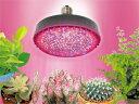 DENSAN:すくす〜く LEDランプ(植物育成用) PSL160W-E2601-RB