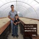 ホンジュラス ラ・モンタニタス農園【300g】  珈琲
