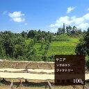 ケニア ングルエリファクトリー【100g】|珈琲 コーヒー 美味しい コーヒー豆 ケニア 焙煎 珈琲豆 豆 エスプレッソ