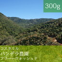 コスタリカバンデラ農園【300g】【スペシャルティコーヒー】【田代珈琲】