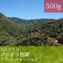 コスタリカバンデラ農園【500g】【スペシャルティコーヒー】【田代珈琲】