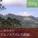 ニカラグアブエノスアイレス農園【300g】