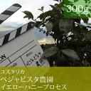 コスタリカベジャビスタ農園イエローハニープロセス【300g】
