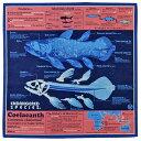 【サイエンス バンダナ シーラカンス ディープブルー 】動物 生物 魚類 古代魚 深海魚