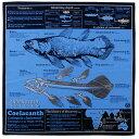 【サイエンス バンダナ シーラカンス ブルー 】動物 生物 魚類 古代魚 深海魚