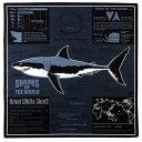 【サイエンス バンダナ ホホジロザメ ダークグレー 】動物 生物 魚類 サメ 鮫