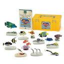【動物 リアル フィギュア 立体図鑑コーラルリーフフィッシュボックス 12種17個 生物の事が良くわ
