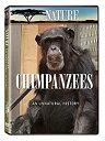 Nature: Chimpanzees - An Unnatural History