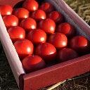 ロッソトマト フルーツ ひまわり