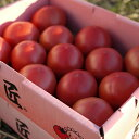 トマトの中のトマト現る!!「匠トマト」【JAひまわり】