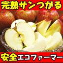 行列のできるリンゴ屋シリーズ!長野丸茂農園サンつがるりんご4.5〜5.5kg12〜23玉家庭用 りんご 訳あり りんご りんご 長野 リンゴ りんご 訳アリ りんご箱 りんご 5kg つがる つがる りんご サンつがる さんつがる サン津軽 りんご 信州 りんご 長野 りんご 送料無料