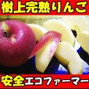 完熟りんごはおいしさが違う!長野 丸茂サンふじ3kg7〜13玉家庭用 りんご リンゴ りんご 蜜