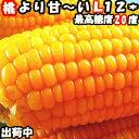 【出荷中】桃より甘い とうもろこし 生で食べれる 累計190...