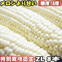 とうもろこし 送料無料 北海道 メロンより甘い 安心の特別栽培認定 生で食べれる 白い