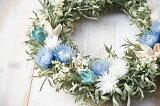 草原で見つけた妖精の花冠♪Coquelicot Azur☆爽やかブルーのリース ナチュラルなグリーンとブルーのドライフラワーリース、水色のシルバーデイジーとキンポウジュの大人カワイ