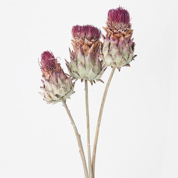 ◎◎アーティーチョーク・ミニN(ナチュラル)(約3本)ドライフラワードライ花資材花材EARTHMAT