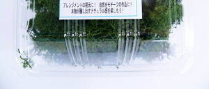 プリザーブドモス ランキング プリザーブドフラワー