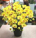 光触媒 胡蝶蘭 【造花】k5-6sミディ黄色タイプ5本立て